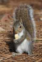 MY NUT and you can not have it by Tailgun2009