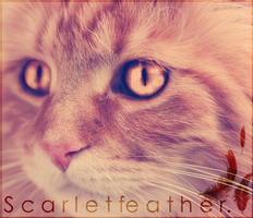 Scarletfeather. by ViperInsidious