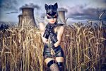 Silverrr cat in the field of gold... by Silverrr-official