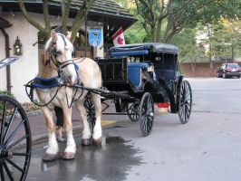 Horse And Buggy by ItsAllStock