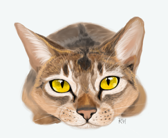Cat realism practice by geckoZen