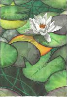 Water Lily - Aquamarkers by GeeMassamArt