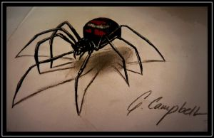 Black widow spider by gilly15