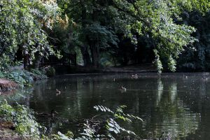 Maksimir2 by IooPa