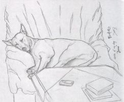 sketchin out my dog by saTHOMASo