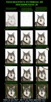 Photoshop Fur Tutorial by neecolette
