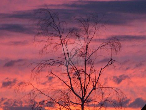 CottonCandyBranches by butrfly2022005
