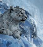 snow leopard I detail by Hagge