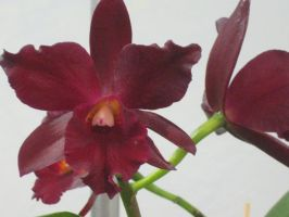 152  orchid show by crazygardener