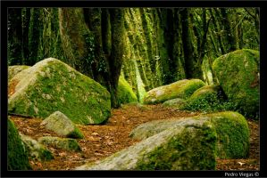 Green Woods by PedroViegas