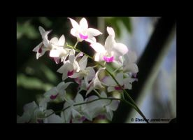Orchids 2 by metalpics
