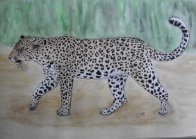 Watercolor and Ink- Leopard by Xhisteriah