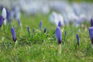 Spring Flowers by MatthewRory