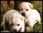 puppies by xaveME