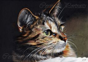 Portrait d'un Chat/Portrait of a Cat by Sadness40