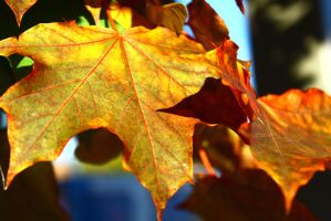 Leaves on a tree by ExposeTheBeauty