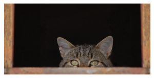 A cat, hiding... by Flo0orian