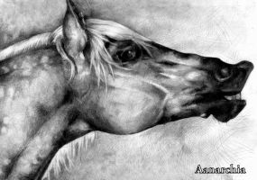 horse part I by A-anarchia