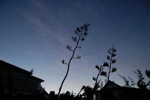 Silhouetted Flower Stem by lsax001