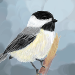 Black Capped Chickadee Paint by Romi2010