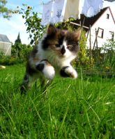 Jump, little cat, jump by Clumsy-thing