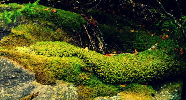 Mossy Magnificence by donnatello129