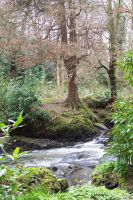 clare glen in tandragee by nightwing1975