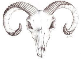 Goat skull tattoo by murderingdoll