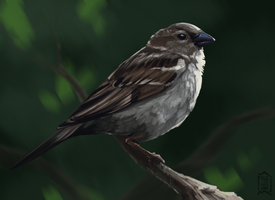 sparrow by Brevis--art