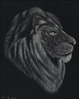 Lion by Music-Raven