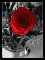 Red Rose by happienoodleboy