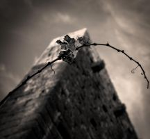 The wall and... by denis2
