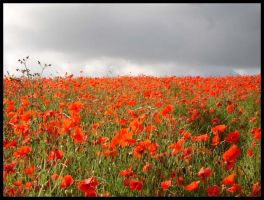 Poppy Fields 'Where I Live' by ChaoticatCreations