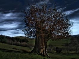 Old Tree with Depth of Field by SolidAlexei