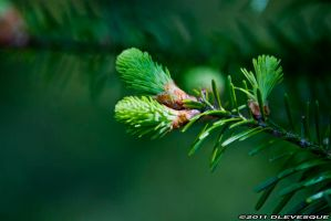 New growth by imonline