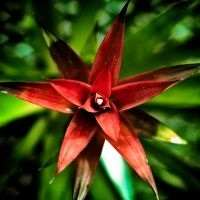 The Red Star by TwistedLabel