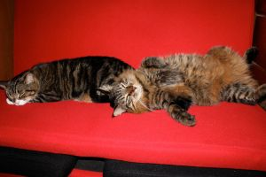 Brown Cats Red Couch 1 by edwardvb