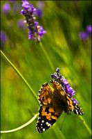 The Butterfly Effect by mamlazoid
