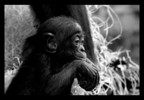 Babymonkey... by Marmal