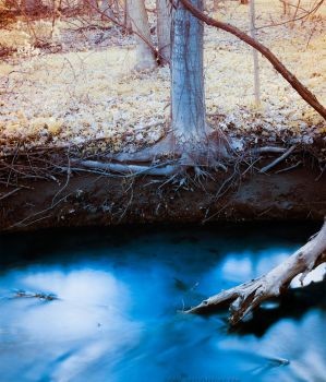 Rooted in a Creek by KBeezie