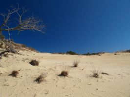 Jockey's Ridge '11 by JCFotografie
