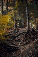 step.and.fall by sarah-marley