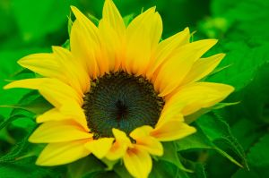 Yellow Flower by slavicphotos