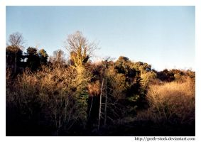 Wooded hill by gmtb-stock
