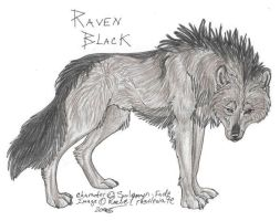 Raven Black by NightTracker