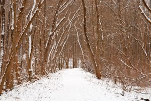 Winter Forest Tipi Trail by somadjinn