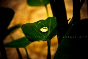 Water Droplet by TwiggyTeeluck