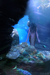 Mermaid by SaFram