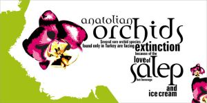 anatolian_orchids_01 by e-keen