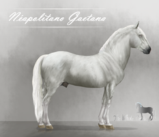 Neapolitano Gaetana ref by The-White-Cottage